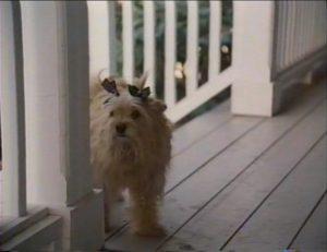 ドッグマチック 犬になるのも最高さ21