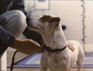 ドッグマチック 犬になるのも最高さ8